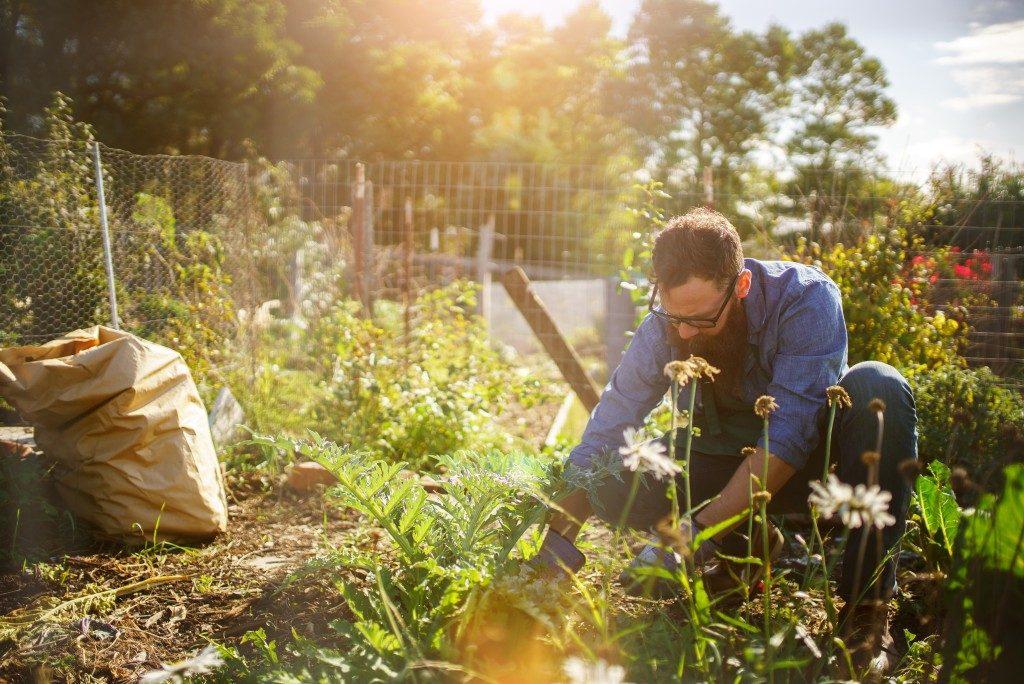 Man planting in his garden
